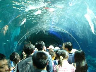 GW水族館7